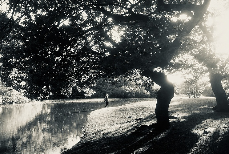 Blog, location, black & white, sole person by lake bank, sunlight through trees, personal